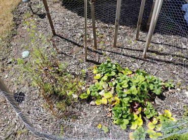 garden-life-ste-do-cli-2