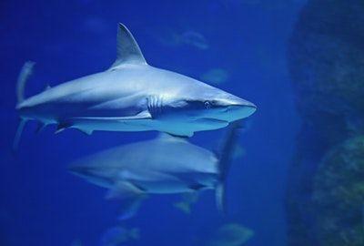repel-sharks-ste-do-cli-sharkbanz