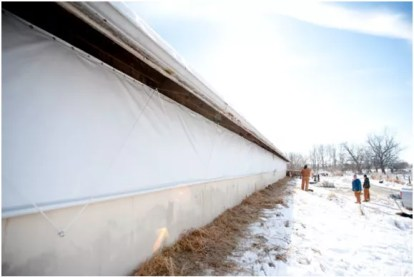 Heat Stress and Poultry How Agriculture Curtains Improve Poultry Health