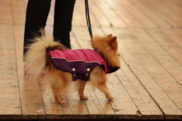 Ofte er linen ikke så stram som det lyder til. Hunden er ligeså nogle gange af en mindre farlig slags.
