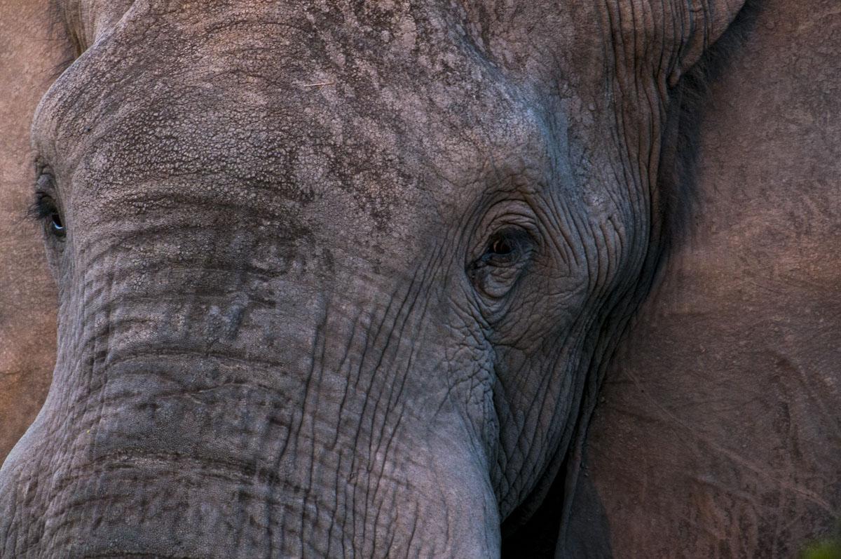 levi-botswana-2735