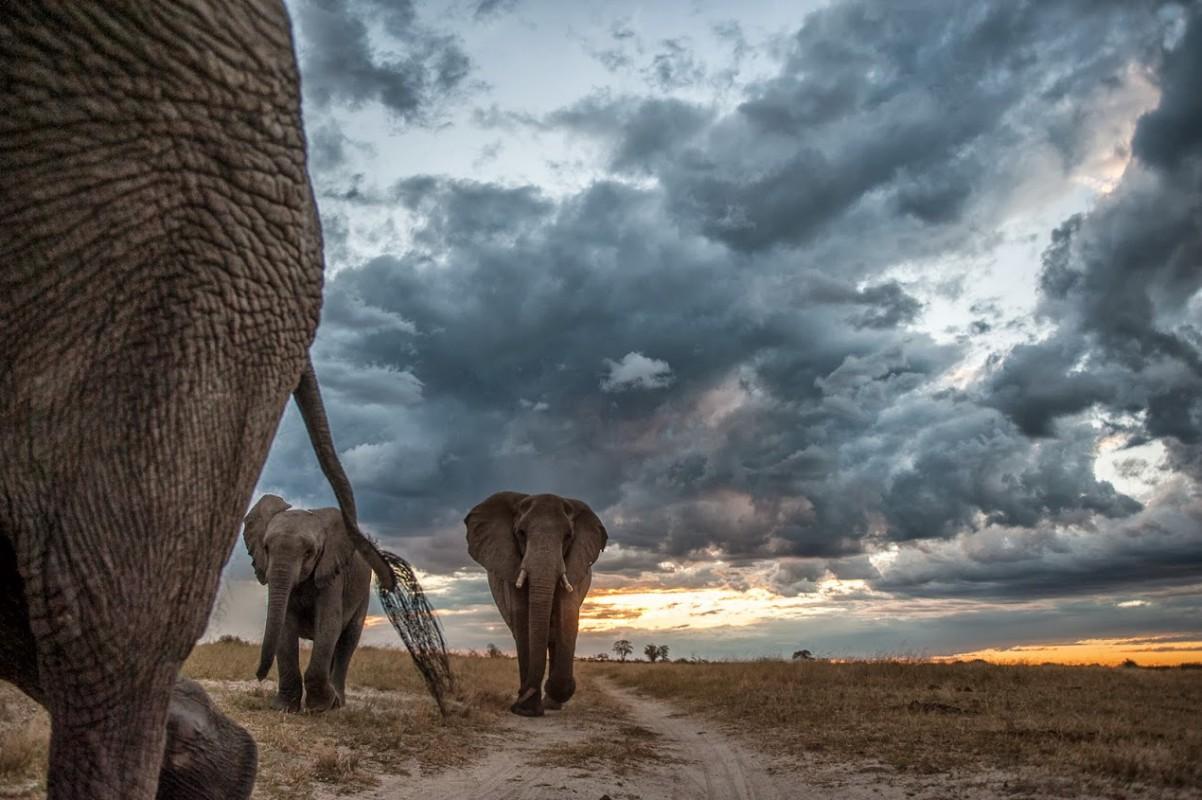 Botswana – Okavango Delta