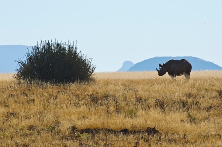 Namibia Photo Safari with Stefano Levi
