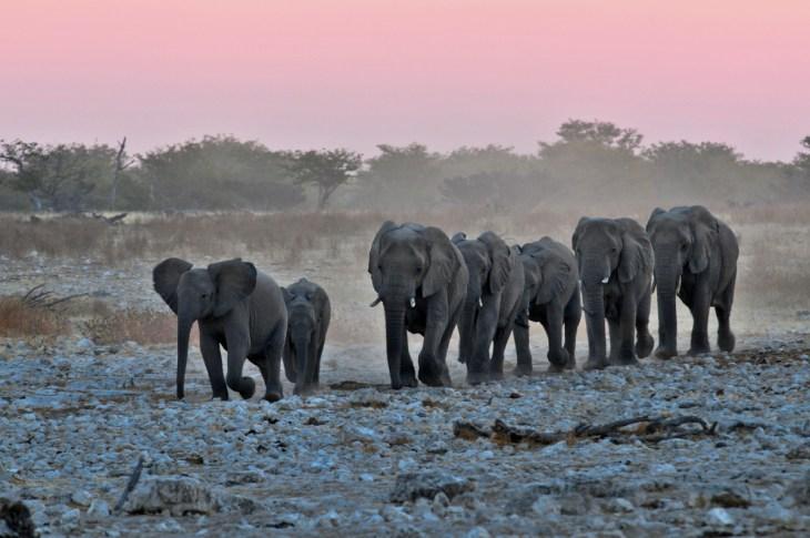 Namibia Photo Safari: Safari Dream