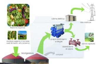 biomasse1