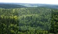 La Foresta Boreale Canadese, dato il clima simile assomiglia molto alla nostra flora