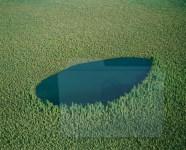 La Foresta Boreale Canadese, un esempio di come doveva essere l'ipotetiva vista dall'alto del nostro territorio 5.000 anni fa