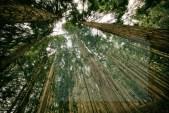 Foresta Italiana