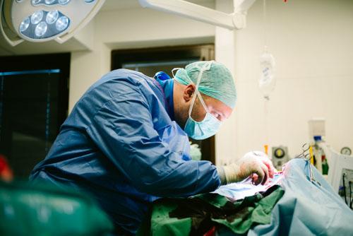 Reportagefoto på djursjukhus under operation. Fotograf Stefan Tell