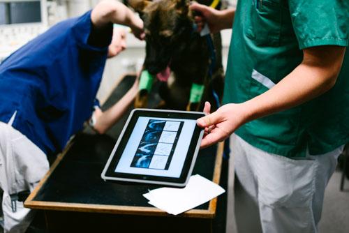 Fotografering till artikel vid undersökning på djursjukhus. Fotograf Stefan Tell