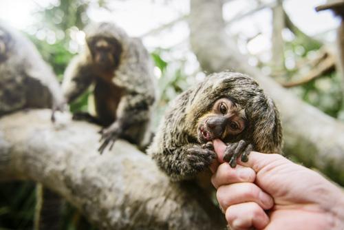 kundtidning-apor-skansen-akvariet