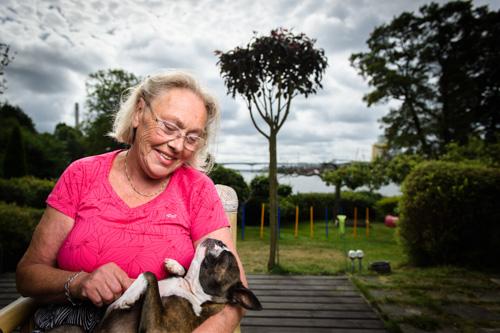 veterinarmagazinet-reportagefoto-bostonterrier