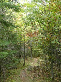 Oberholtzer Trail - Voyageurs National Park