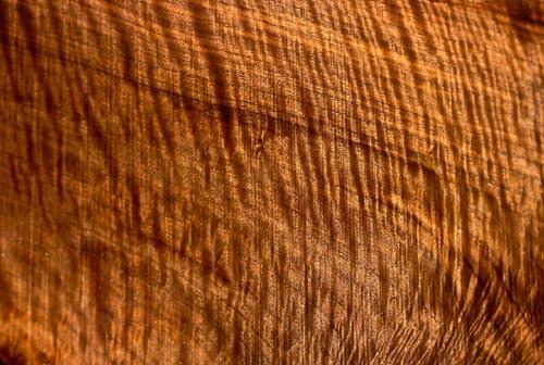File de bastogne - fibra lemnului