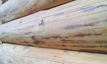 casutele de lemn