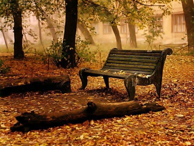 banca veche in parc Banca in parc