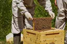 stupi cu albine