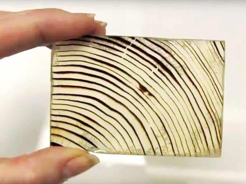 lemnul transparent