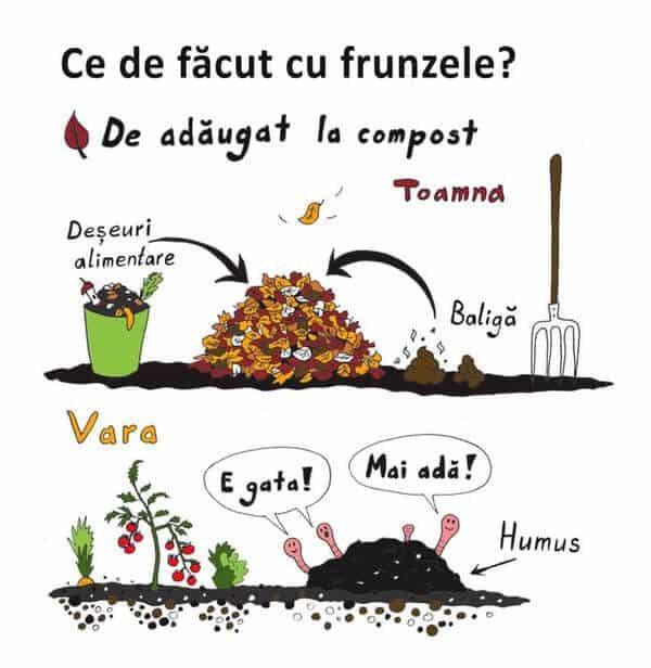 Frunzele uscate