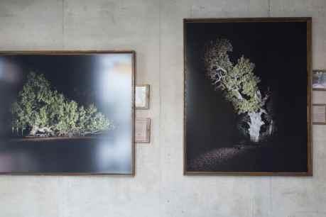 Arbori bătrâni - Florin Ghenade cu rame din frasin fabricate de Ionut Dragnea