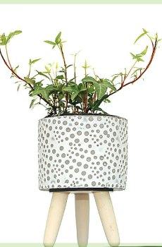 hedera helix evergreen pot 6cm