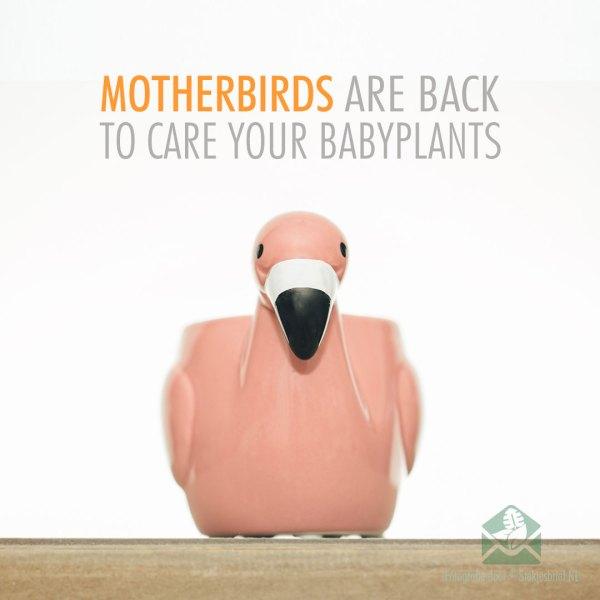 Motherbird pink bloempot plantenpot sierpot 6 cm