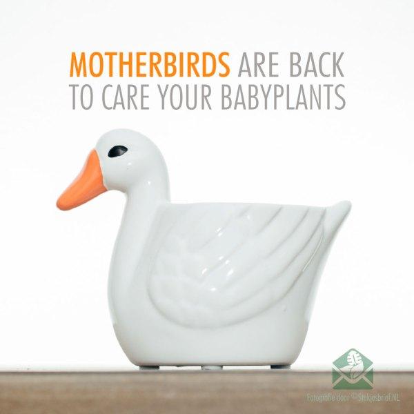Motherbirds sierpotten bloempotten plantenpotten setje van 5stks