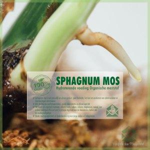 Sphagnum orchidee mos bodemdekking