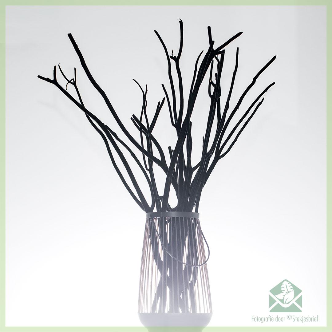 Mitsumata Decoratie Takken 10 Stk Black Velvet 60 Cm Stekjesbrief Nl