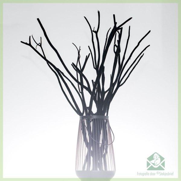 Mitsumata decoratie takken Black Velvet 60 cm