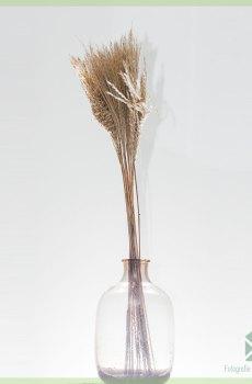 Pampas pluimen droogbloemen Natural 75 cm