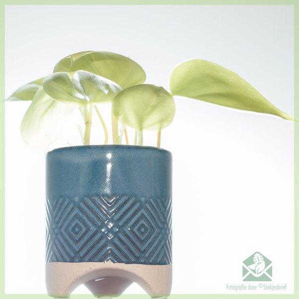 Babe plantenpot bloempot sierpot 6 cm