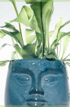 DummDumm Blue plantenpot sierpot bloempot bloemmenpot kopen