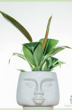 DummDumm White plantenpot sierpot bloempot kopen
