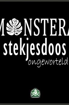 Monstera stekjesdoos ongeworteld stekjes pakketdeal kopen