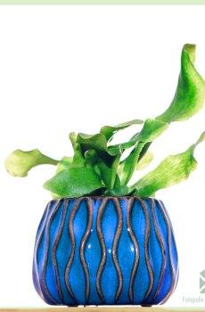 Alta plantenpot bloempot sierpot 6 cm