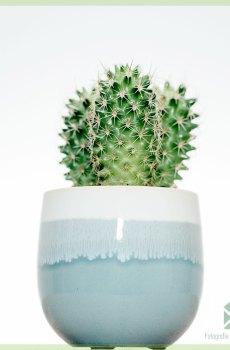 Finnish Green plantenpot bloempot sierpot 6 cm