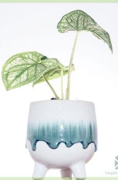 Pugsley plantenpot bloempot sierpot 6 cm