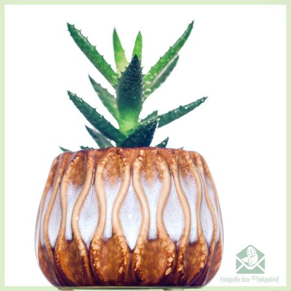 Surt plantenpot bloempot sierpot sierpotten kopen