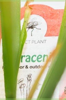 Sarracenia - trompetbekerplant - vleesetende plant kopen