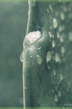 Naadloze cactus kopen en verzorgen