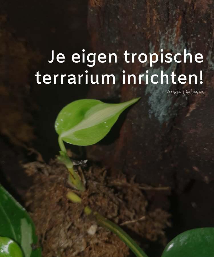 Blog - Je eigen tropische terrarium voor kamerplanten inrichten