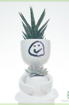 sansevieria-francisii-spear-plant-kopen