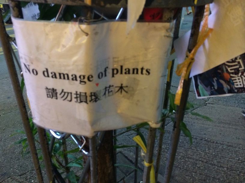 no plant damage