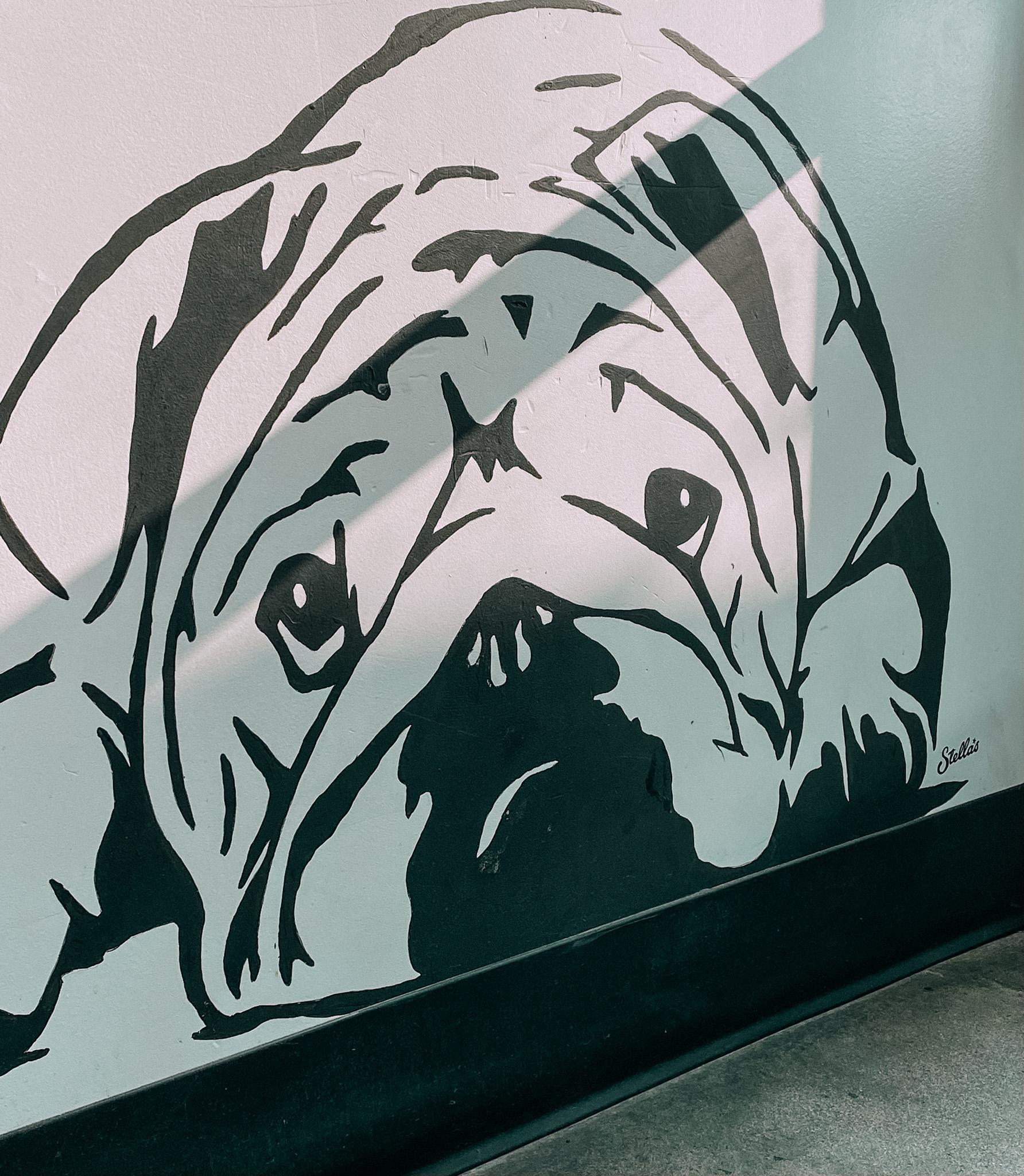 Stella the Bulldog