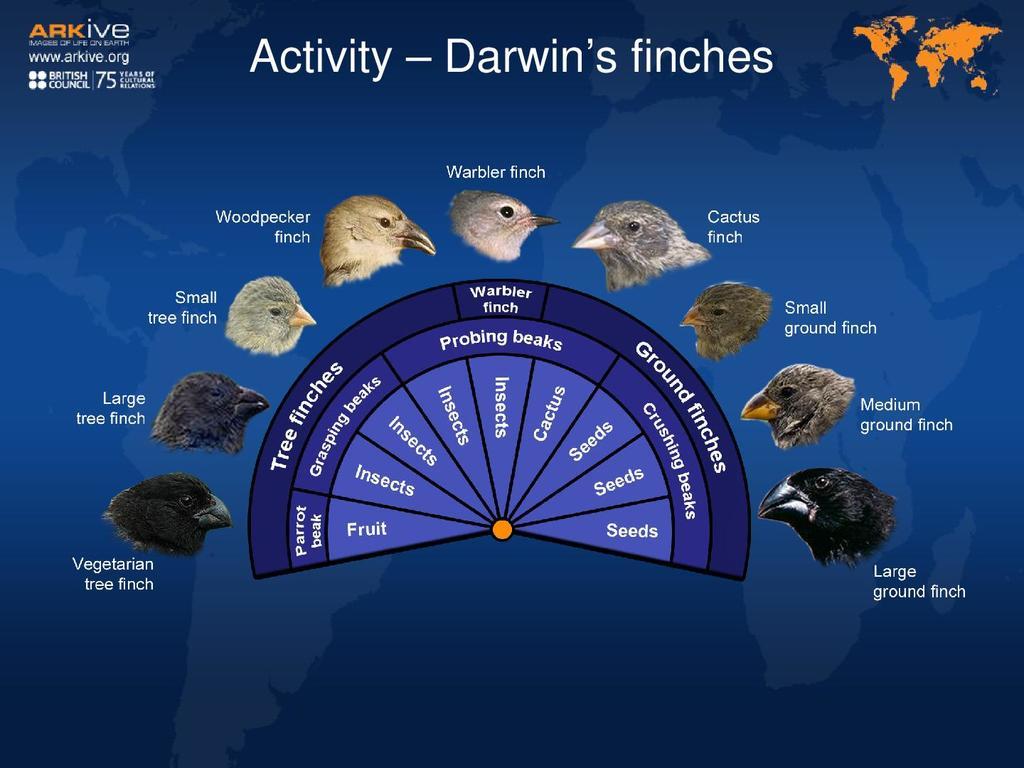 Darwin S Finches Worksheet