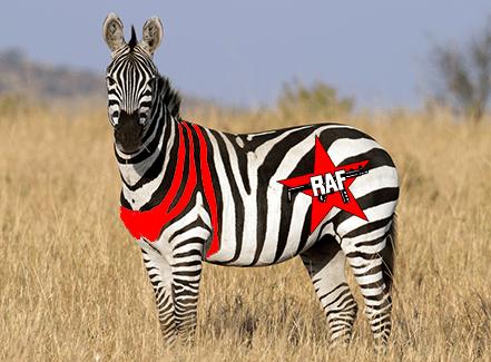 Baader-Meinhof Zebra