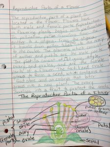 4 point interactive science notebook entry example