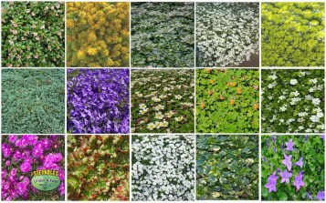 Assorted All-Terrain Ground Covers
