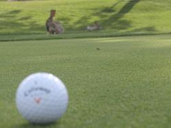 step by stepゴルフスクール